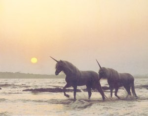 Unicorns on beach